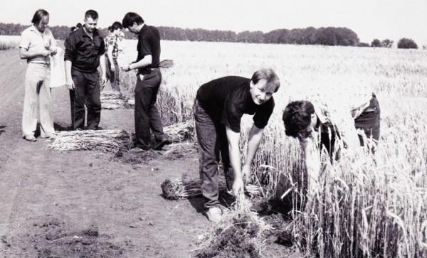 Відбирання студентами снопових зразків зернових культур