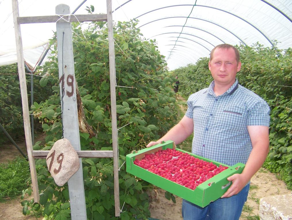 Ферма по выращиванию малины 55